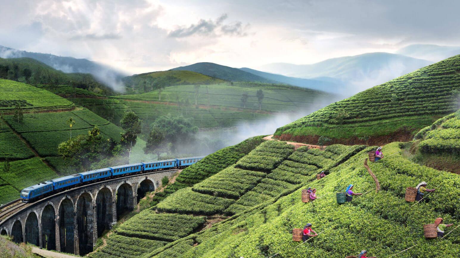 Story of Ceylon Tea